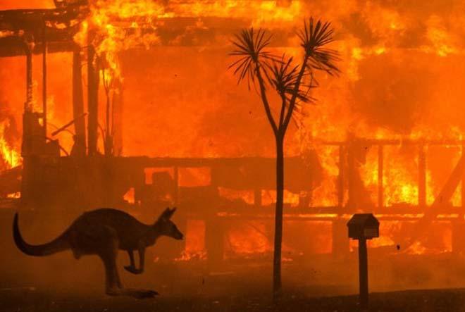 2020 yılı nasıl geçti Avustralya Yangını