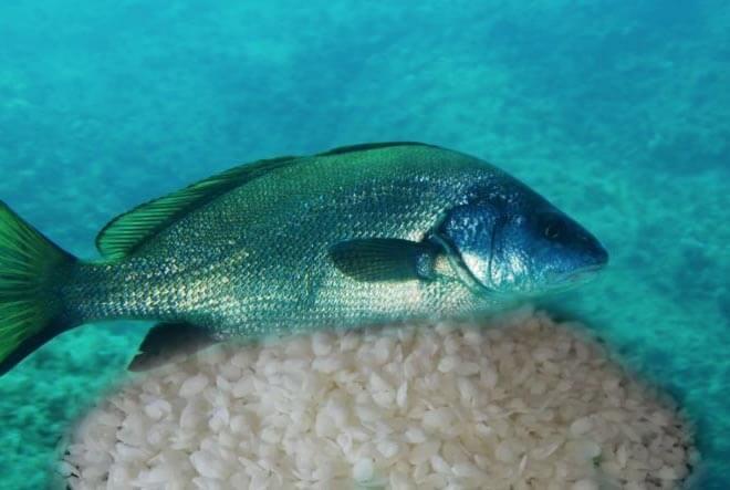 böbrek taşı evde nasıl düşer eşkına balığı